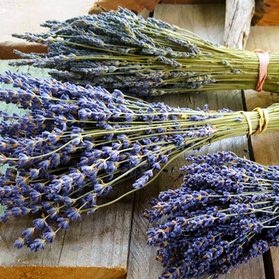 Lavender-bunches-20160422_150930_resized_1