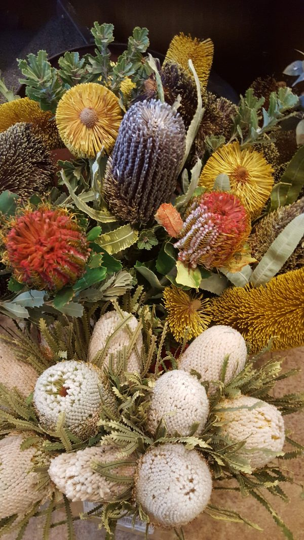 Dried Flowers - Banksias